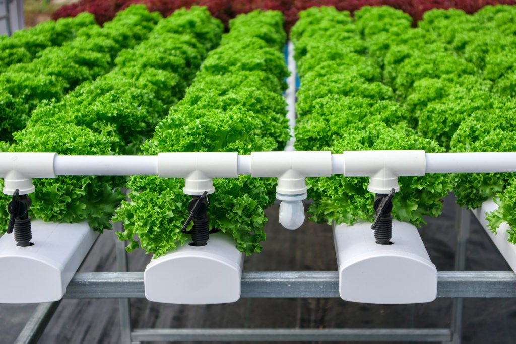 green plants in a row with automatic watering system